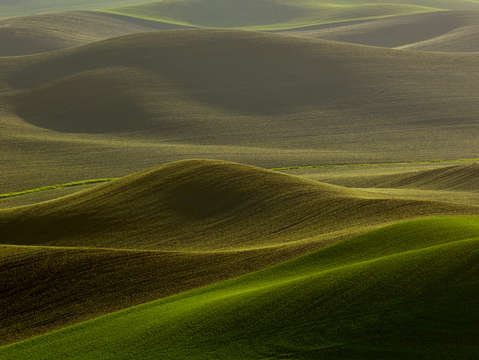 Palouse browns