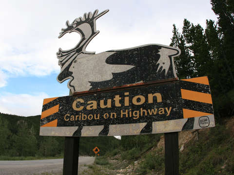 Caution caribou on highway