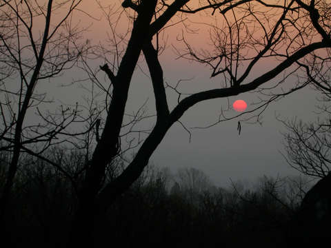 Maryland evening