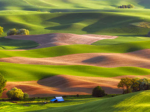 Palouse stripes