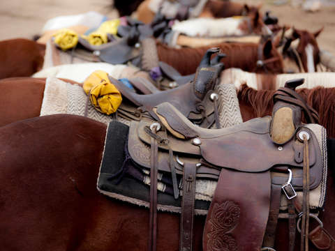 Horses and saddles