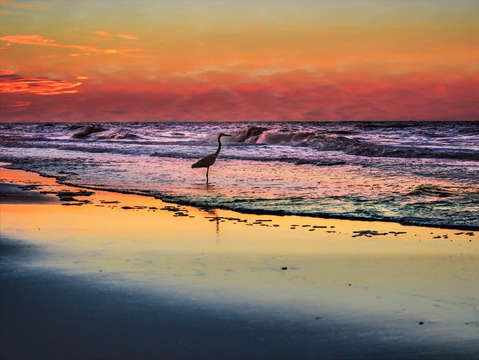 Pink sky and heron in the surf