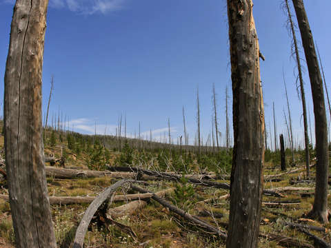 Yellowstone national park forest fire damage