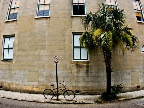 Bicycle palm tree in charleston