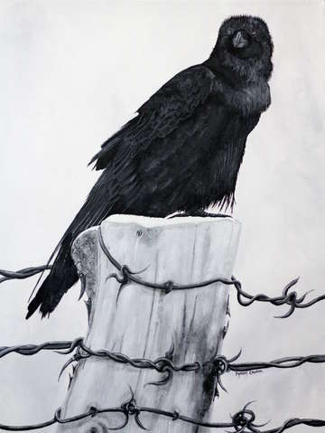 Raven on a post