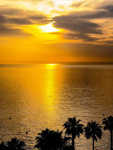 Sunrise with Gold water and Palm Trees