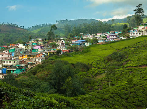 Tea village in munnar