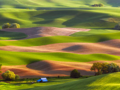 Palouse stripes 2