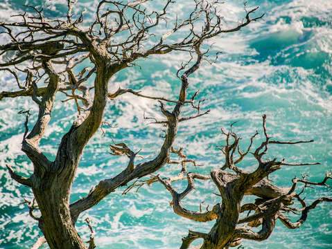 Tree and surf