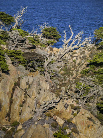 Cliffs and trees point lobos