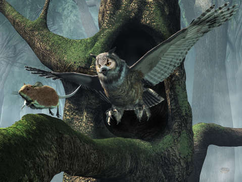 The mouse and the owl