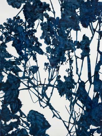 Blue grape vines