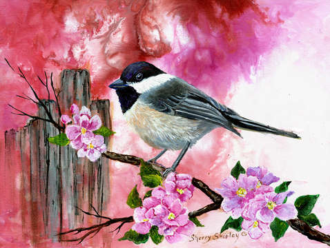 Chickadee with apple blossoms