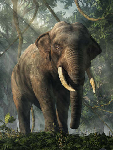 Jungle elephant