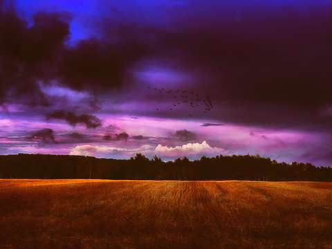 Landscape purple