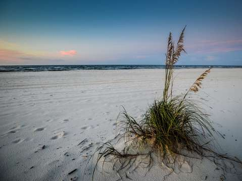 Grass and seaoats on a lone beach