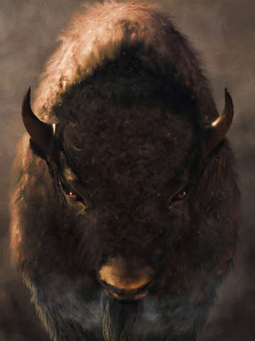 Portrait of a buffalo