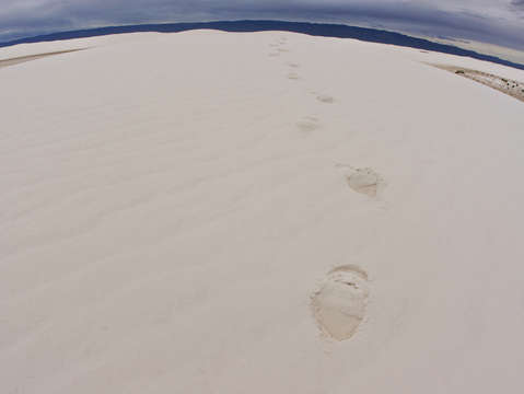 Footprints at white sand dunes national monument