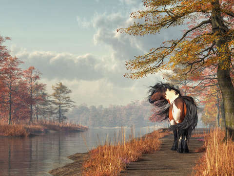 Pinto horse on a riverside trail