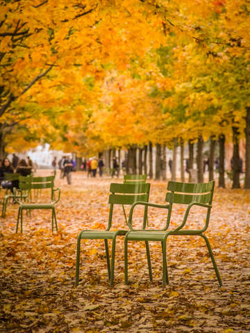 Autumn in jardin des tuileries