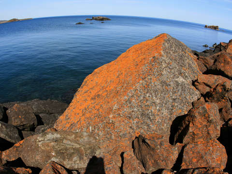 Orange moss at lake superior