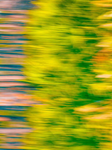 Abstract moving trees background green warm tones