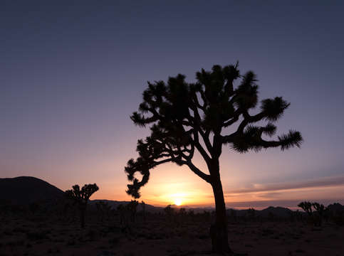 Joshua tree sunset 2