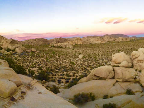 Joshua tree lookout