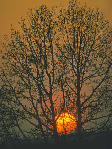 Sun setting winter tree 55e0114