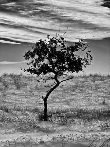Lonely tree 3