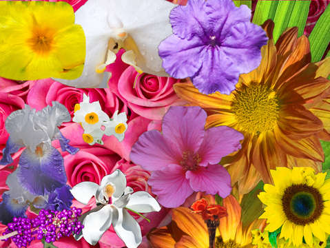 Floral collage 1