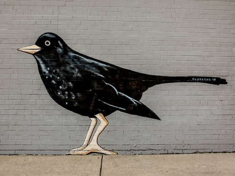 Black bird on a wall
