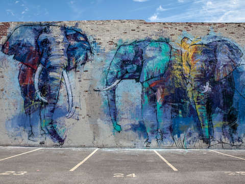 Elephants in dallas