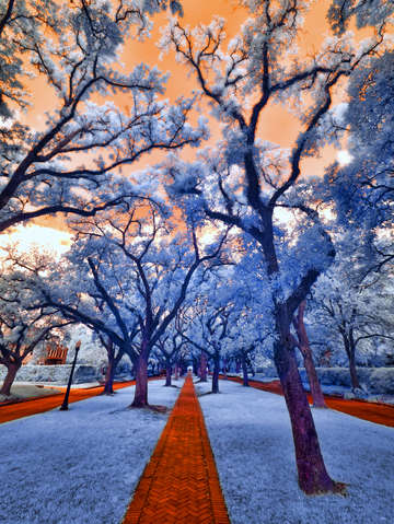 North boulevard in infrared