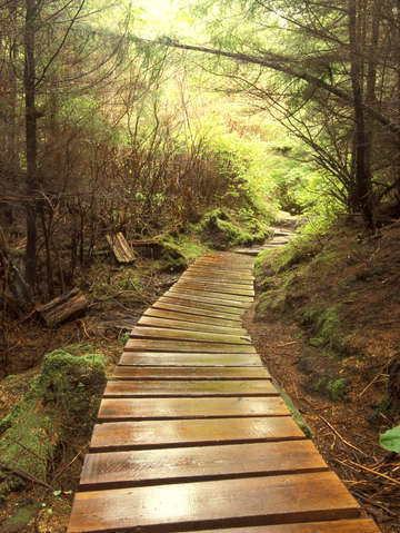 Sitka pathway