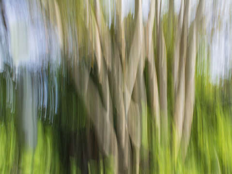 Moving trees 36 landscape format