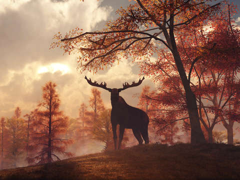 A moose in fall