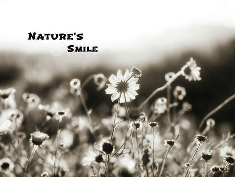 Natures smile series 12