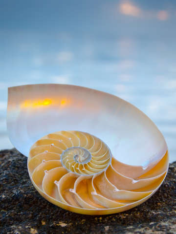 Sunset nautilus 3078