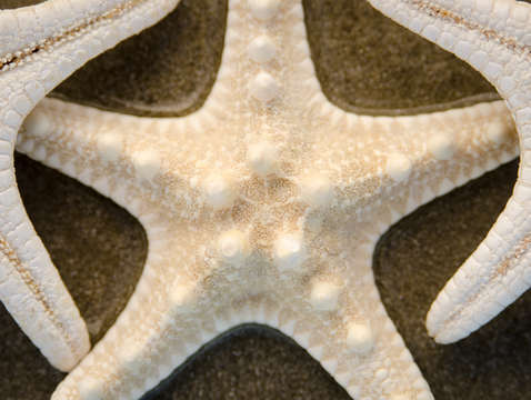 Three starfish 9529