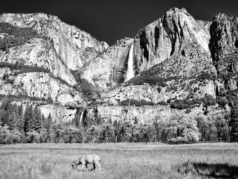 Yosemite valley bw