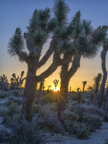 Good morning from joshua tree 2