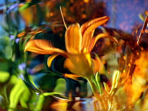 Reflecting on a Tiger Lily