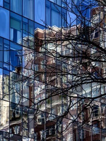Glass architecture reflections and tree