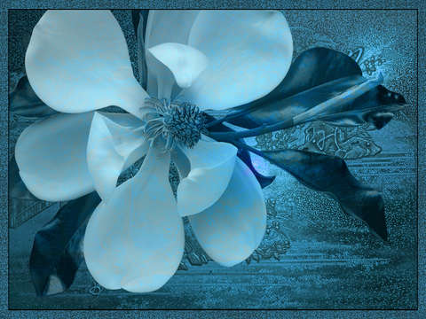 Magnolia in blue