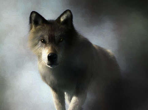 Portrait of a wolf