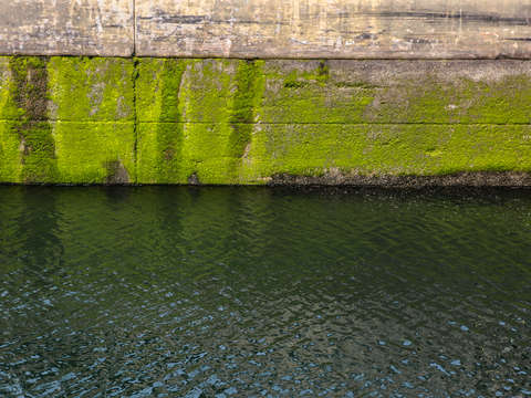 Moss at the ballard locks