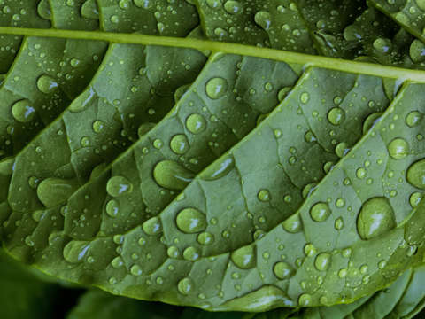 Raindrops and leaf