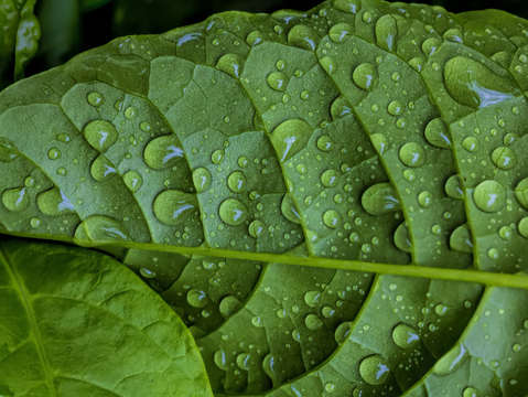 Raindrops and leaf 2