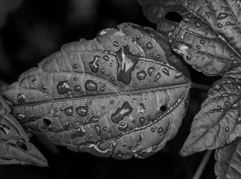 Raindrops and leaf 3